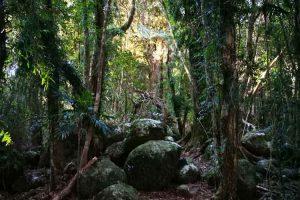 hiking-springbrook-mountain-6.jpg
