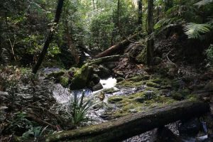 rainforest-springbrook-1.jpg