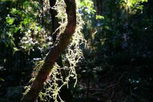 rainforest-springbrook-mountain-1.jpg