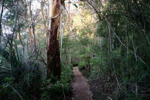 springbrook-mountain-hike-1.jpg