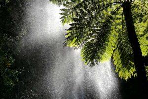 waterfall-springbrook-1.jpg