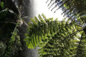 waterfall-springbrook-5.jpg